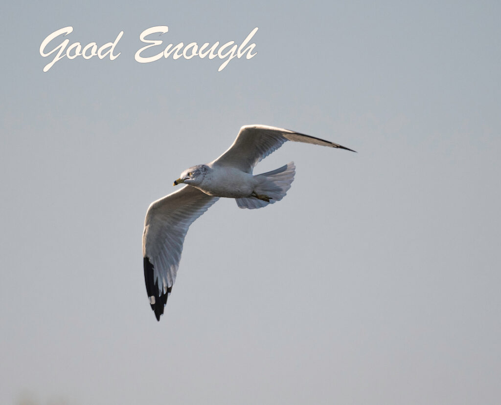 """A lone seagull flying through a grey sky. The words """"Good Enough"""" are superimposed onto the image."""